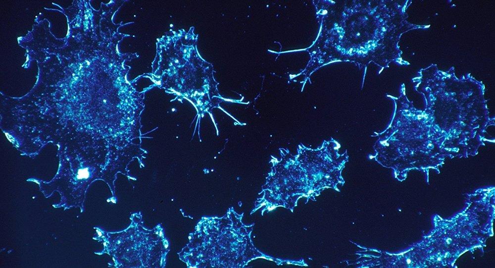 Komórki rakowe