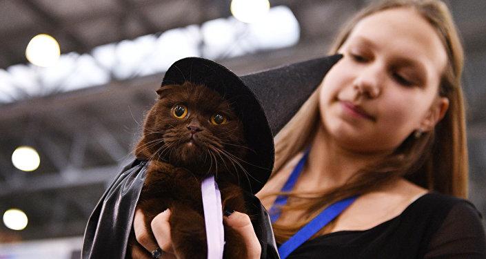 Czarny kot