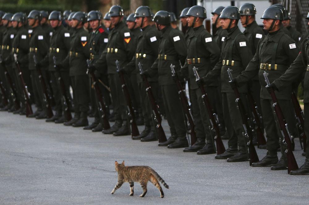 Kot uliczny i straż honorowa w Nikozji (stolicy Cypru) czekają na wizytę prezydenta Turcji Tayyipa Erdogana