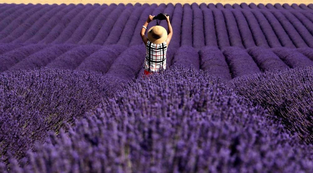 Chiński turysta fotografuje lawendowe pole, Valensole, Francja