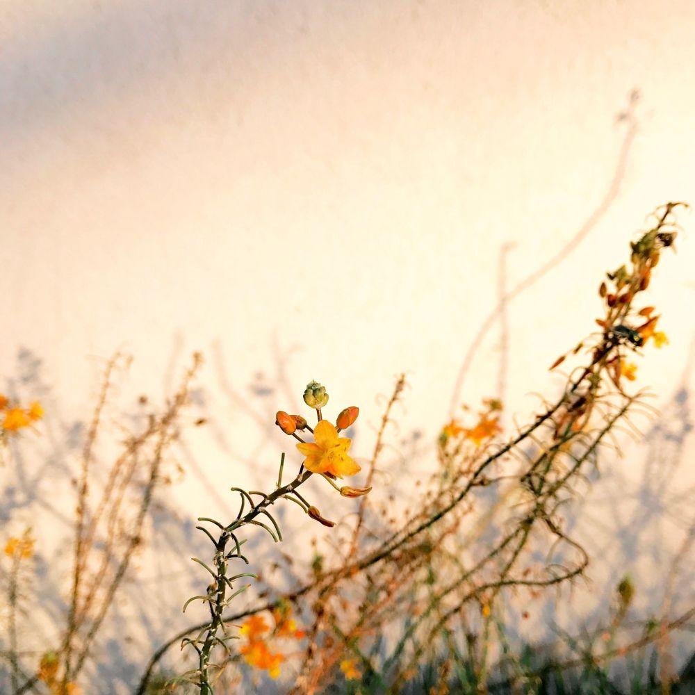 Fotograf Alison Helena zajęła pierwsze miejsce w nominacji rośliny w konkursie fotograficznym iPhone Photography Awards 2018