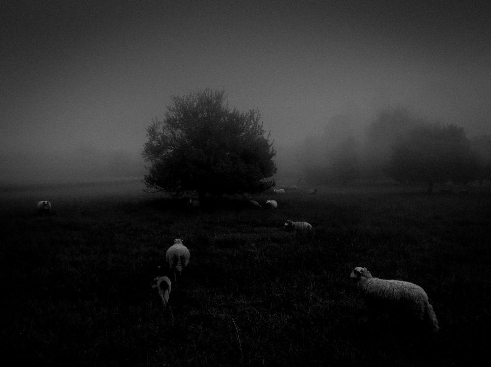 Fotograf Sukru Mehmet Omur zajął pierwsze miejsce w nominacji przyroda w konkursie fotograficznym iPhone Photography Awards 2018