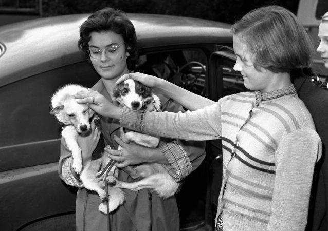 Dziewczynka głaska radzieckich psów Biełkę i Striełkę