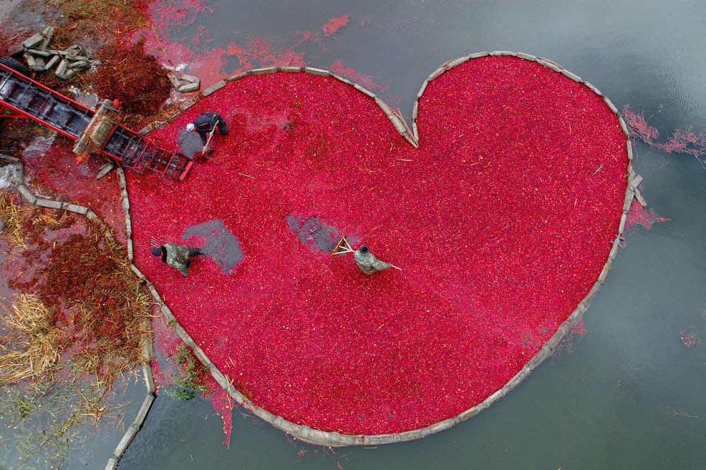 Żurawinowe serce