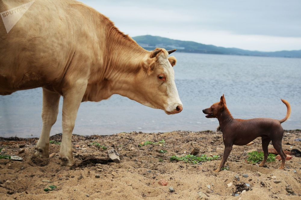 Zwierzęta na wyspie Putiatin