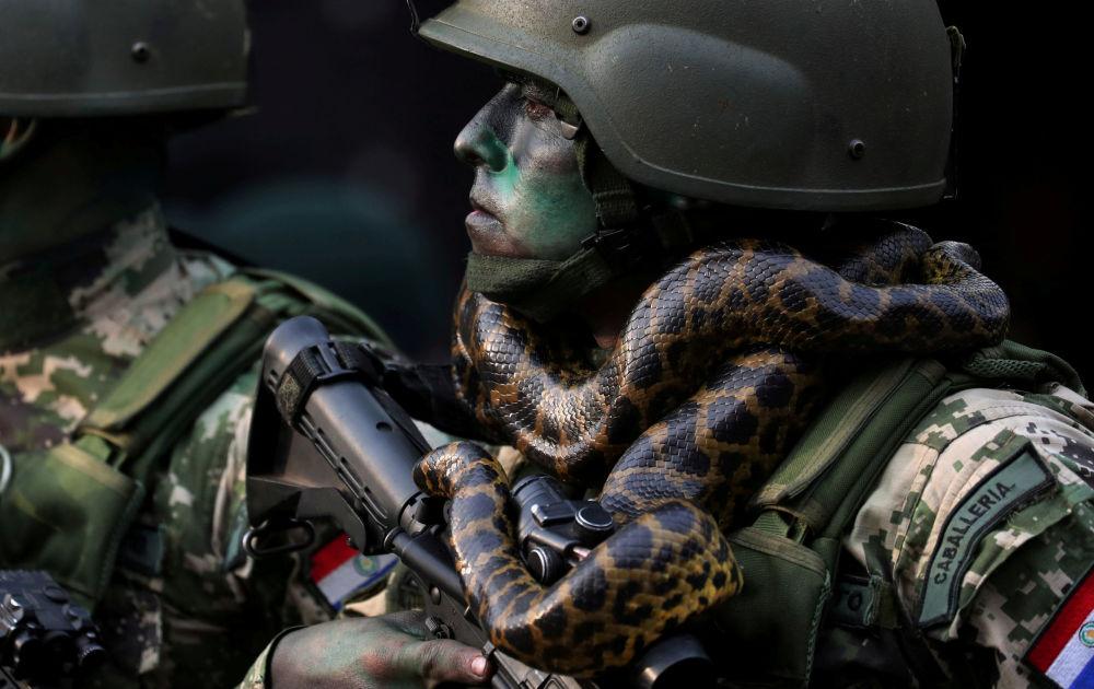 Żołnierz sił specjalnych z wężem na szyi podczas parady wojskowej w Asuncion, Paragwaj