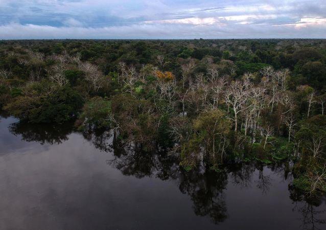 Widok na las i rzekę Jaraua w rezerwacie stabilnego rozwoju Mamirauá w stanie Amazonas, Brazylia