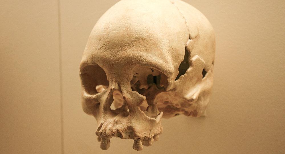 Kopia czaszki Luzie w Muzeum Historii Naturalnej w Waszyngtonie