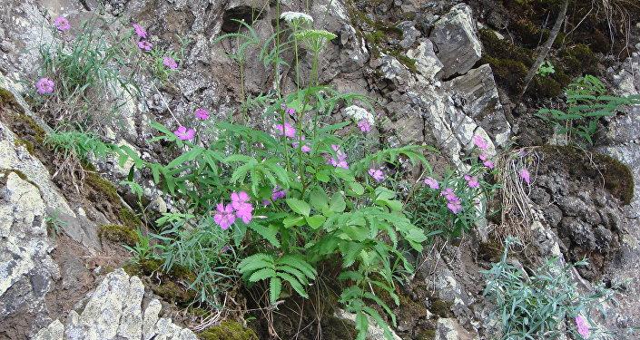 Rośliny na wyspie Czakmut