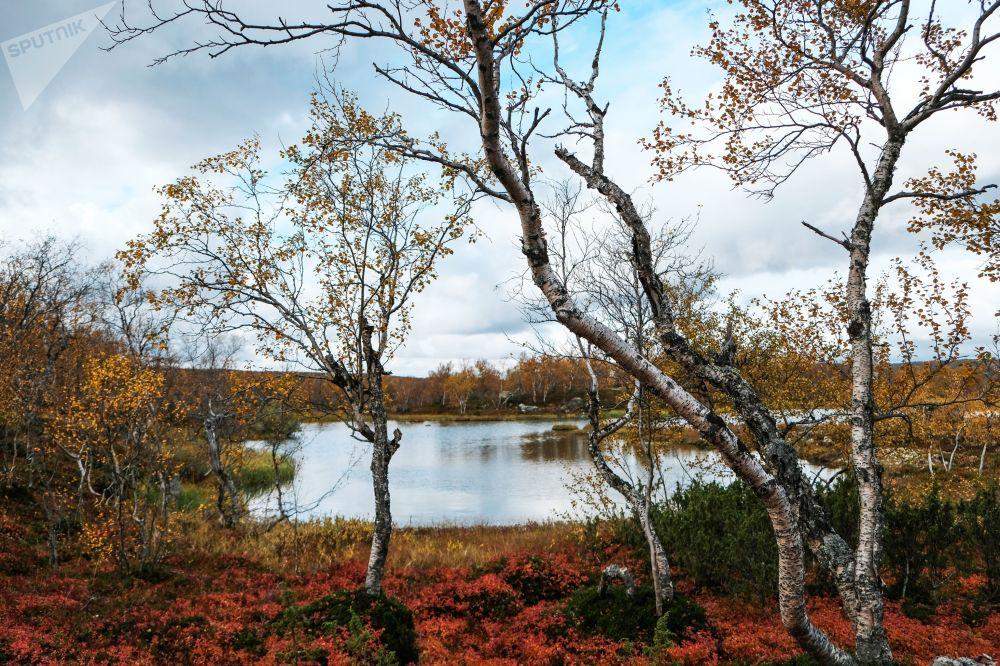 Półwysep Kolski w obwodzie murmańskim
