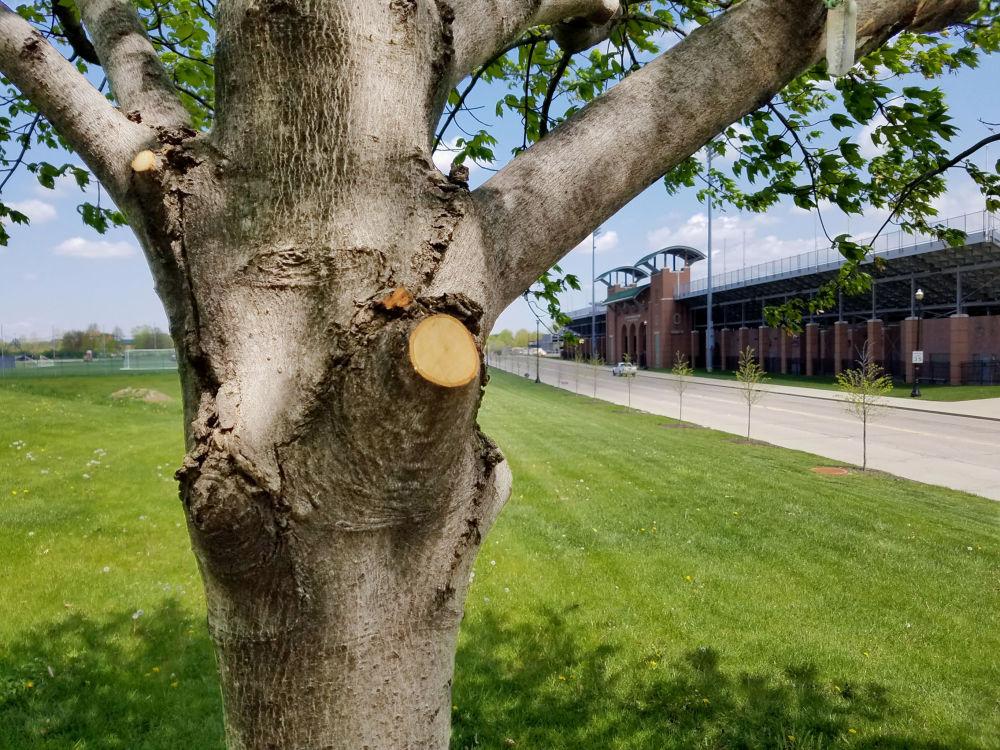 Uśmiechnięte drzewo