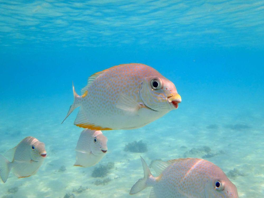 Uśmiechnięte ryby