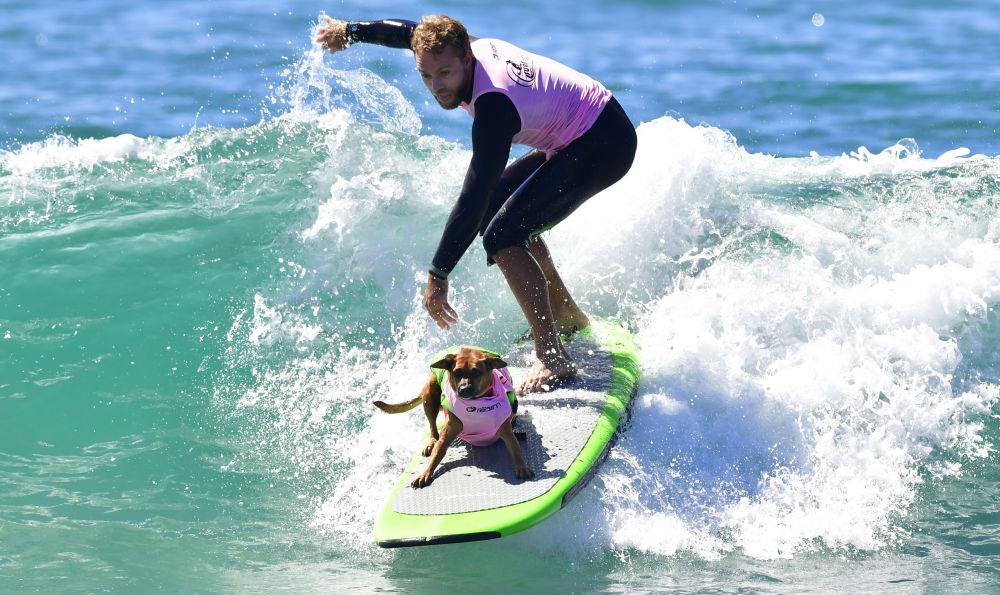 Zawody psich surferów Surf City Surf Dog w Kalifornii