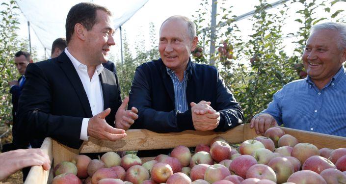 Przewodniczący rosyjskiego rządu Dmitrij Miedwiediew i prezydent Rosji Władimir Putin w sadzie jabłoniowym w Kraju Stawropolskim