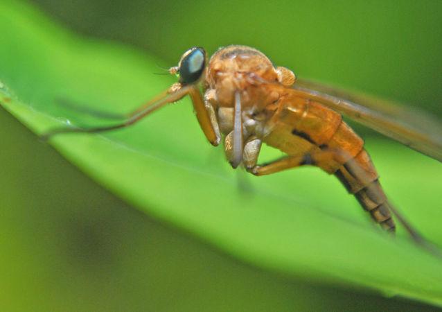 Komary z rodzaju Culex