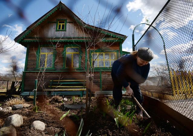 Ogródek na daczy, obwód nowogrodzki