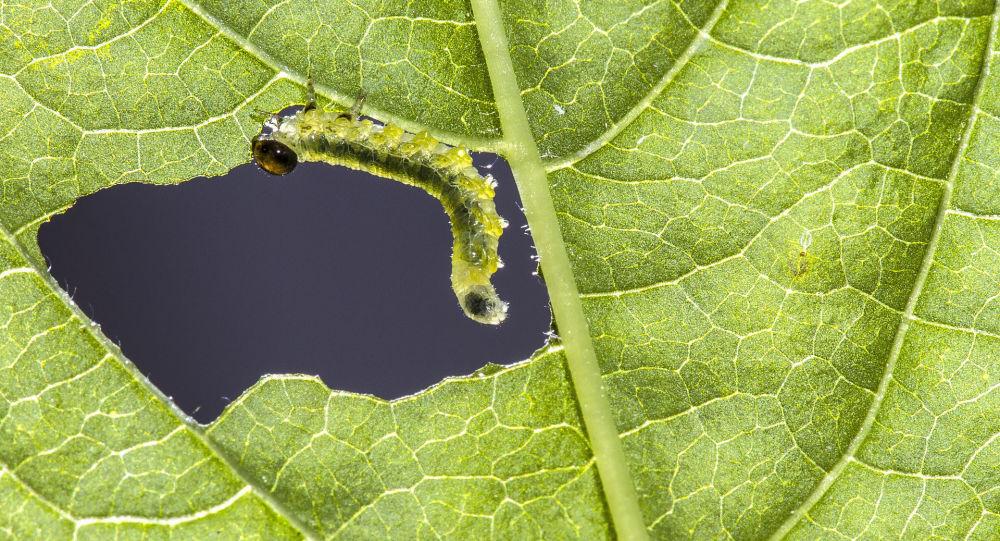 Gąsienica jedząca liść