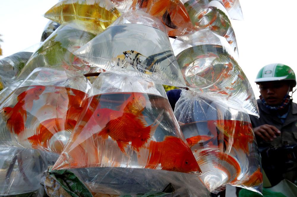 Sprzedaż rybek w Wietnamie