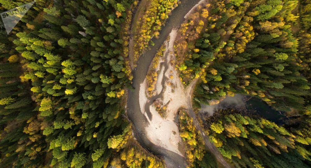 Rzeka Koyard w Kraju Krasnojarskim
