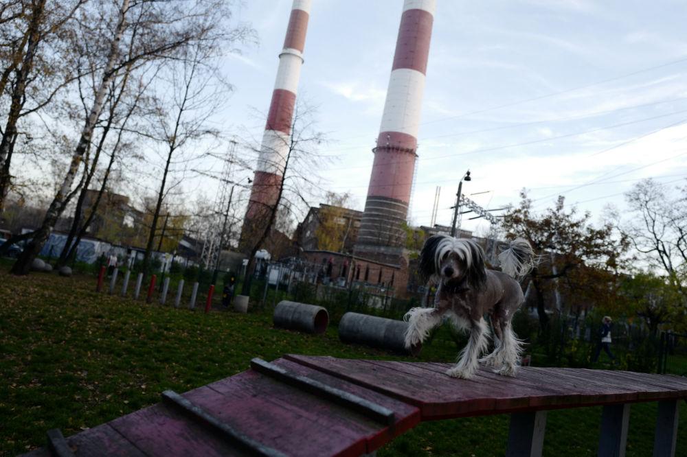 Park dla psów w Katowicach