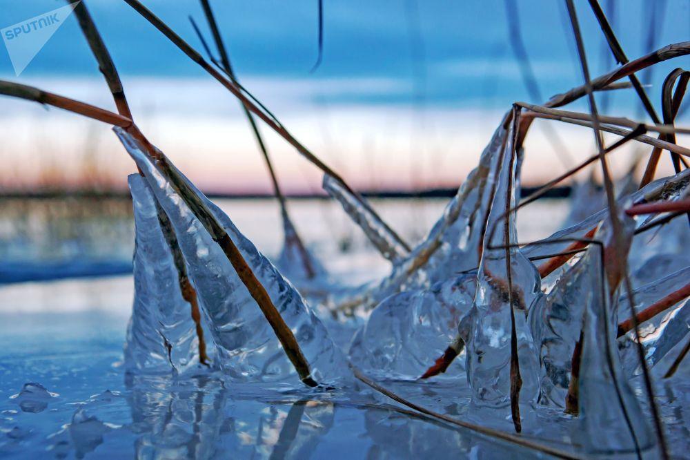 Lód na łodydze na wybrzeżu jeziora Onega