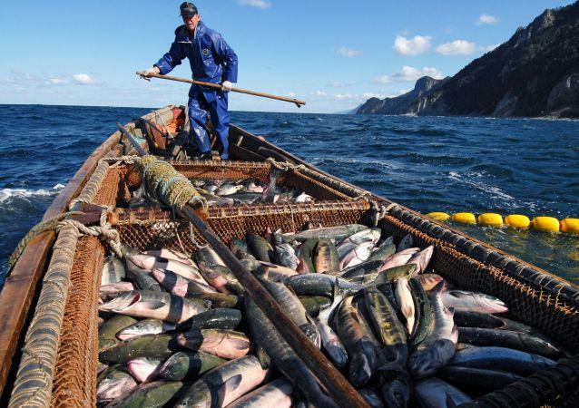 Połów łososia w Morzu Ochockim