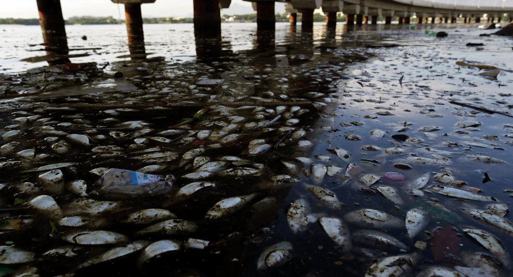 Martwe ryby w Rio de Janeiro
