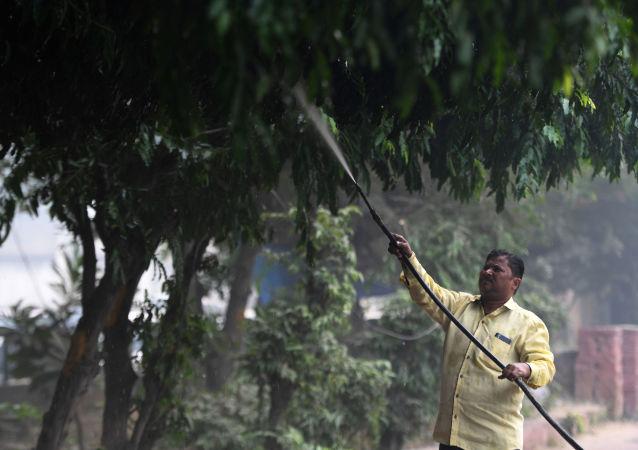 Mężczyzna podlewa drzewa w New Delhi