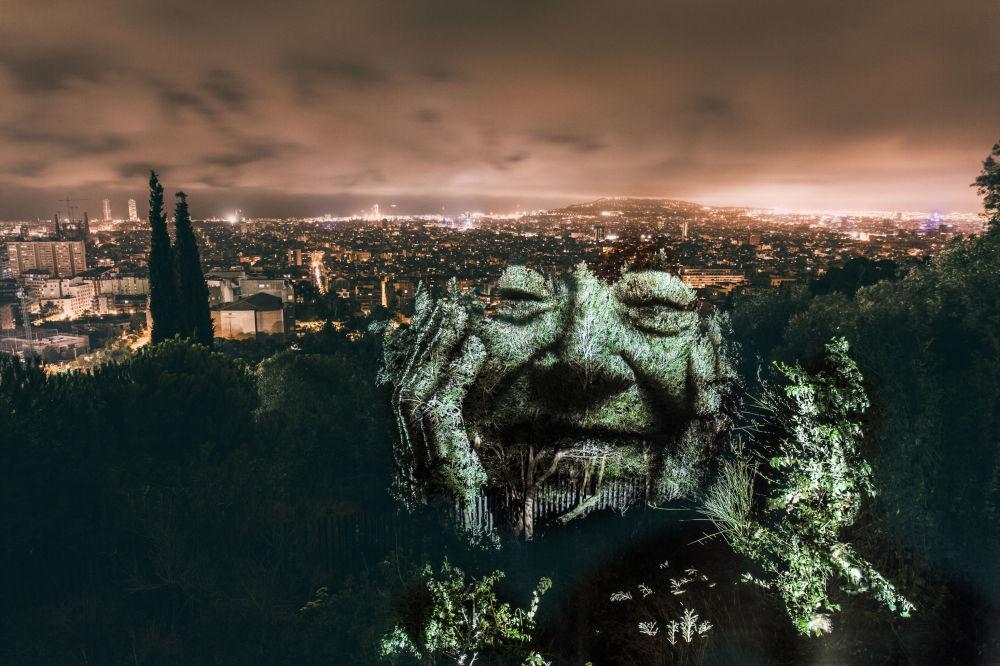 Portret na drzewach w Barcelonie