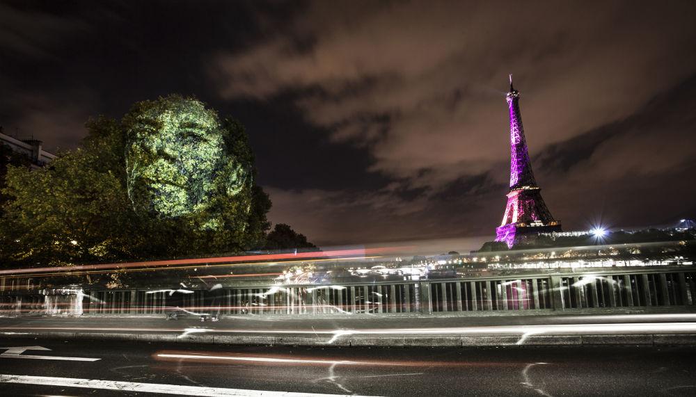 Portret na drzewach w Paryżu