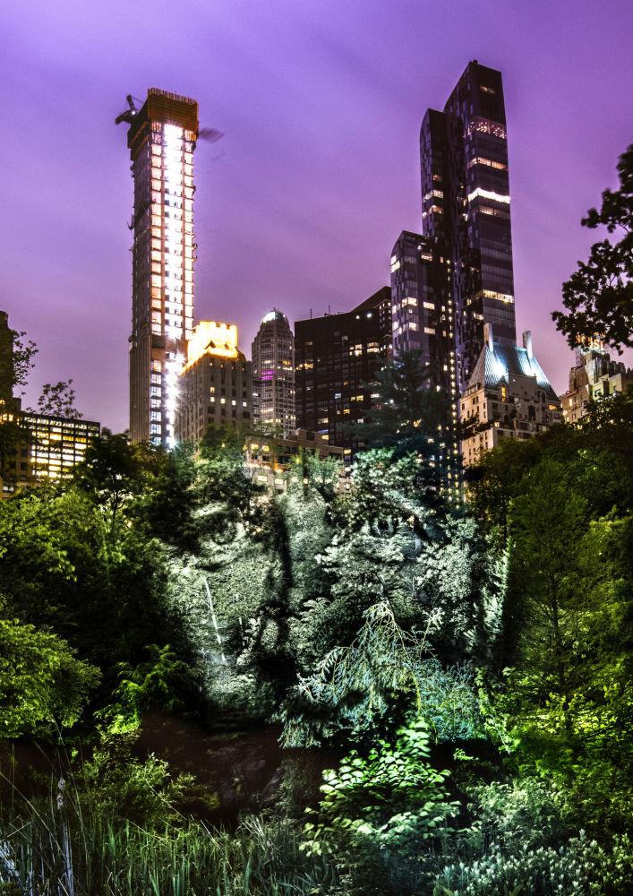 Portret na drzewach w Nowym Jorku
