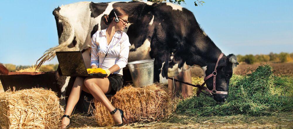 Dziewczyna z laptopem i krowa