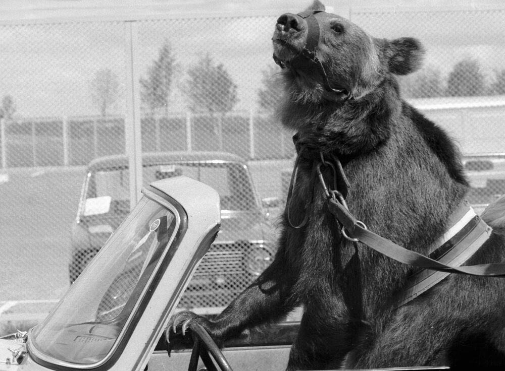 """Niedźwiedź Gosza otwierał dyscypliny rowerowe na stadionie """"Kryłatskoje"""""""