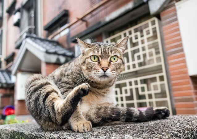 Bezdomny kot