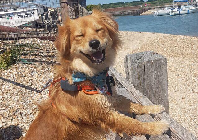 """""""Mega szczęśliwy pies"""""""