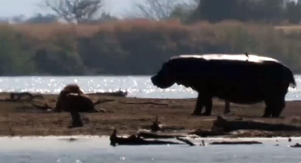 Kadry z Parku Krugera w RPA