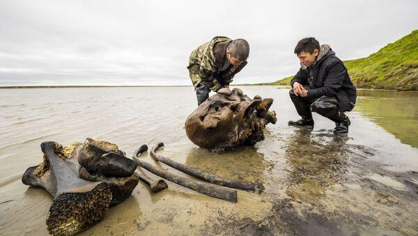 Kości mamuta, znalezione na terenie Jamalsko-Nienieckiego Okręgu Autonomicznego - Sputnik Polska