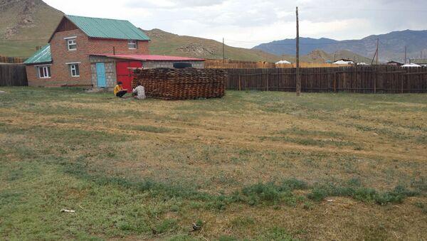 Na zachodzie Mongolii wprowadzono kwarantannę z powodu zachorowań na dżumę dymieniczą. - Sputnik Polska