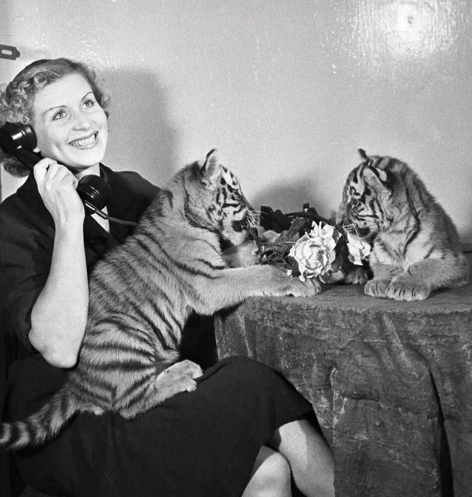 Treserka tygrysów Margarita Nazarowa z młodymi tygrysami