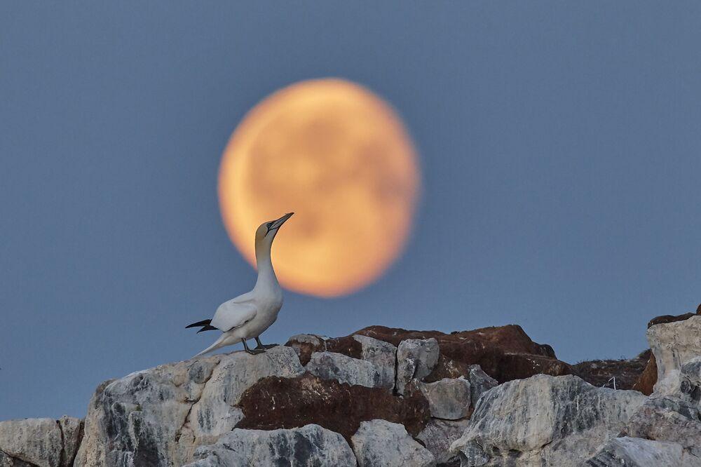 """""""Księżycowe sny"""""""