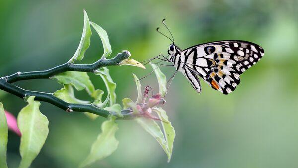 Motyl na gałęzi - Sputnik Polska