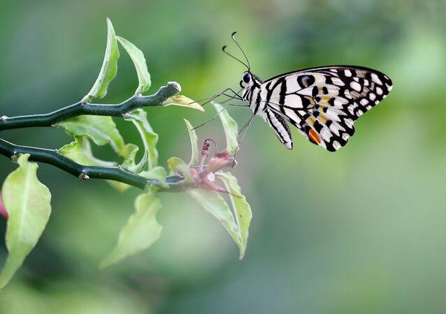 Motyl na gałęzi
