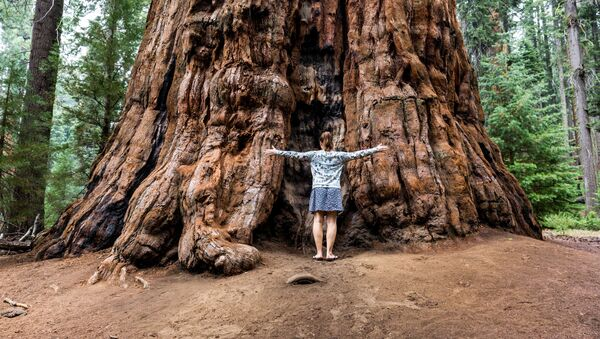 Sequoia National Park - Sputnik Polska