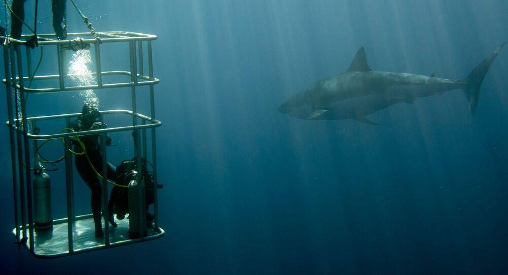 Nurkowanie w klatce z rekinami
