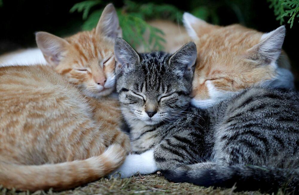 Śpiące kocięta we wsi Krompach w Czechach