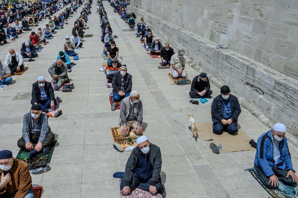 Kot wśród wierzących podczas piątkowych modlitw w pobliżu meczetu Fatih w Stambule w Turcji