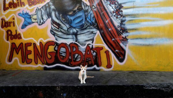 Kotek na tle graffiti na obrzeżach Dżakarty w Indonezji - Sputnik Polska
