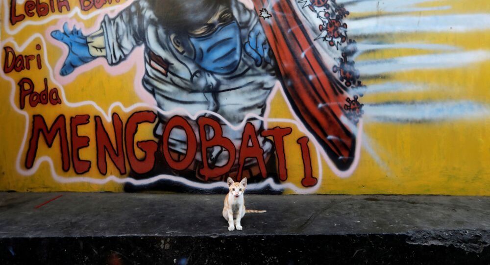 Kotek na tle graffiti na obrzeżach Dżakarty w Indonezji