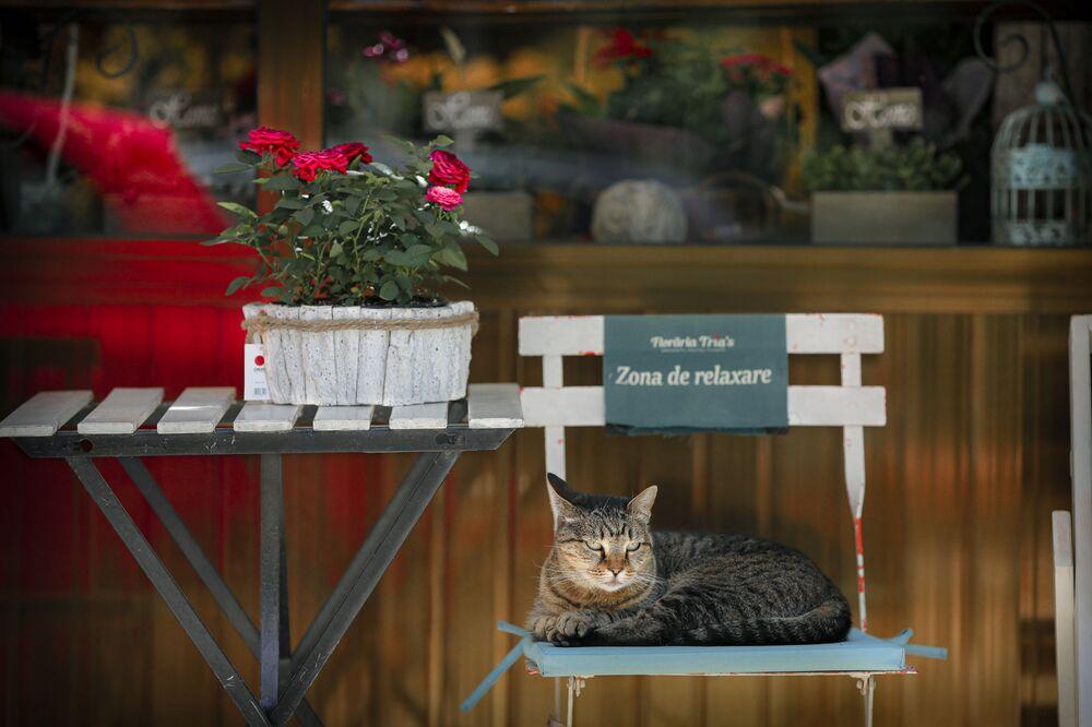 Kot siedzi na krześle przed kwiaciarnią w Bukareszcie w Rumunii