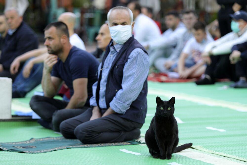 Kot wśród modlących się muzułmanów w pobliżu meczetu Kokonoz w Tiranie w Albanii
